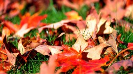 Autumn Leaves Wide wallpaper