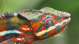 Lizard 1080p