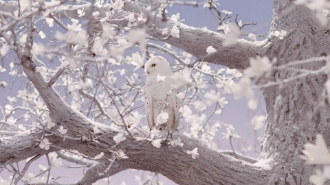 White Owl wallpapers high quality