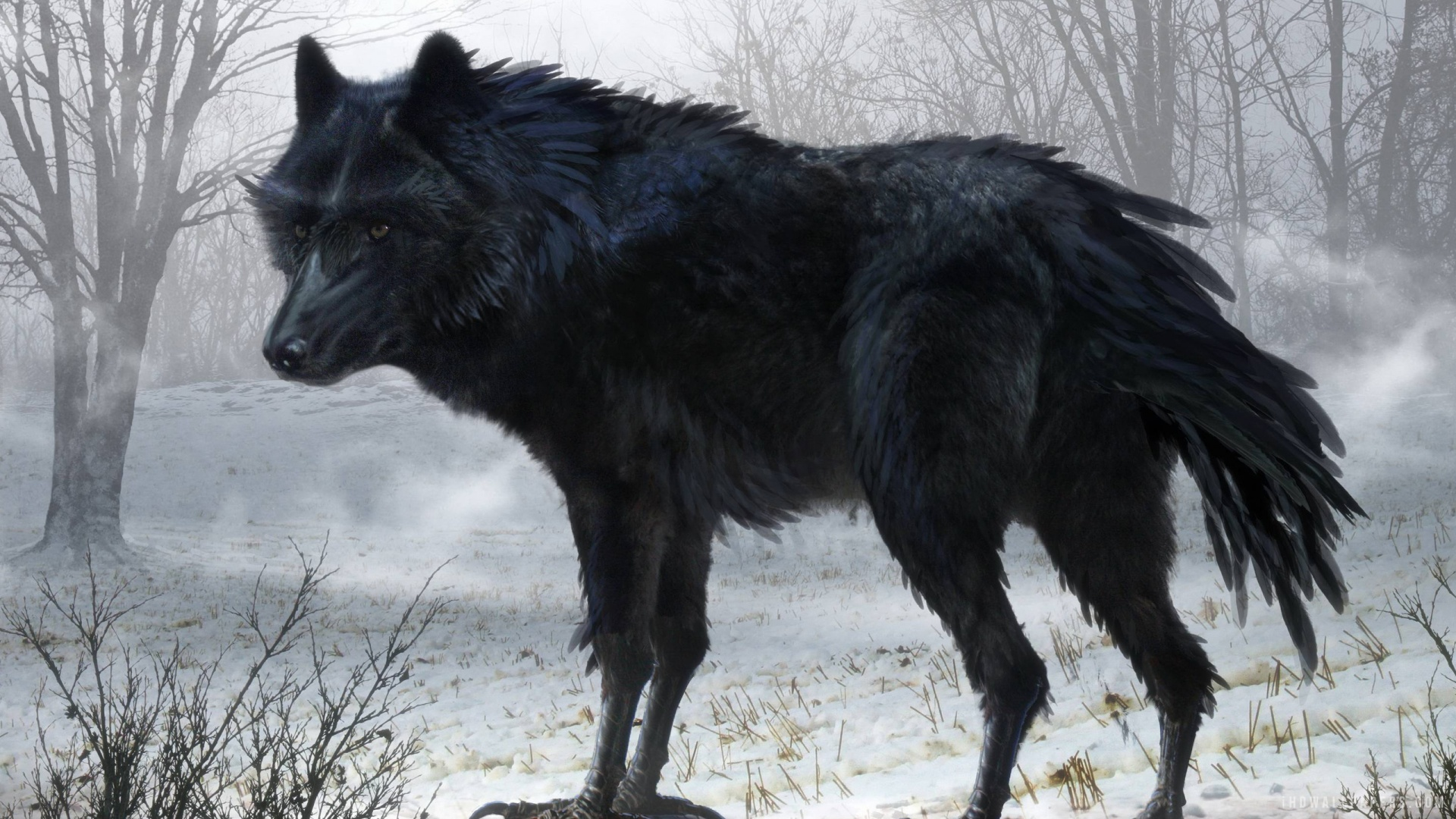 Black wolf wallpapers high quality download free voltagebd Gallery