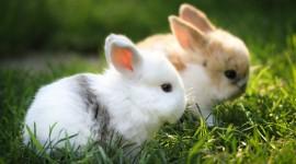 Bunny 4K