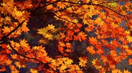 Autumn Leaves High resolution