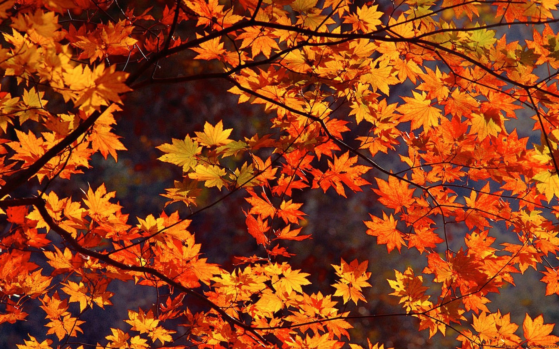 Autumn Leaves Wallpapers High Quality