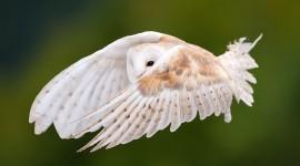 White Owl 1080p