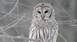 White Owl for android