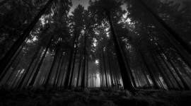 Black Wood  High Definition
