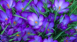 Blue Flowers High Definition