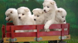 Puppies High resolution
