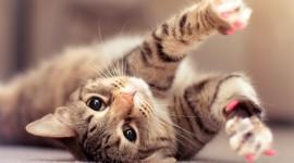 Cat Full HD