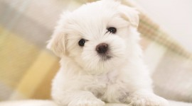 Puppies HD Wallpaper