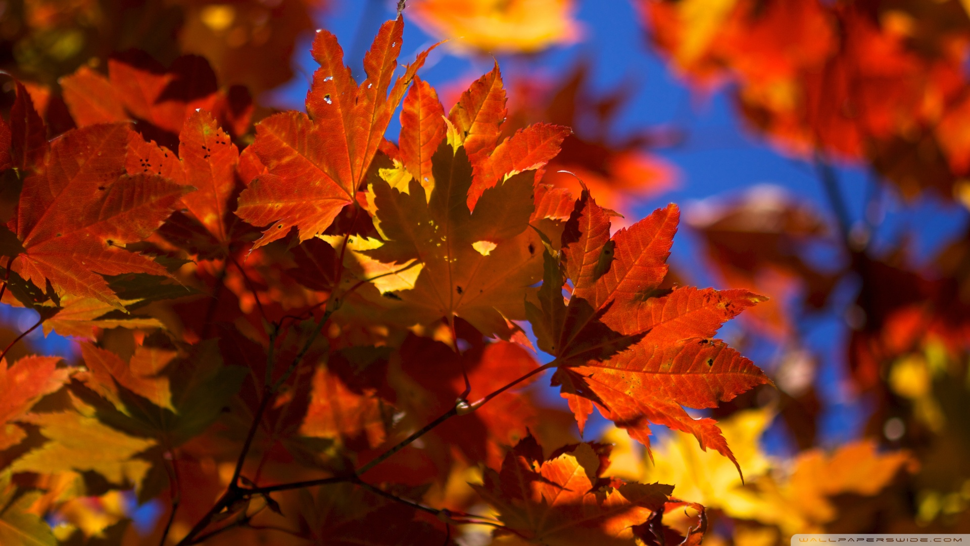 autumn leaves wallpapers high quality download free