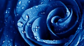 Blue Flowers HD Wallpapers