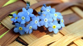 Blue Flowers for android
