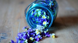Blue Flowers Free download