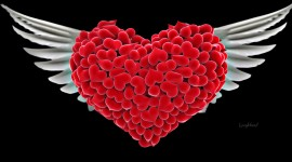 Heart HD Wallpapers
