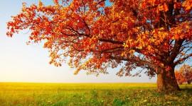 Red Leaves Tree