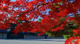 Red Leaves Tree HD Wallpapers