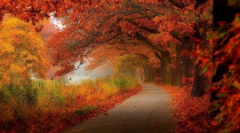 Red Leaves Tree Wallpaper