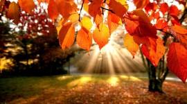 Red Leaves Tree free