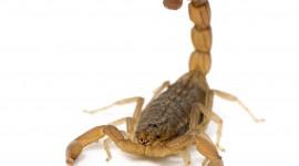 Scorpion free download #399