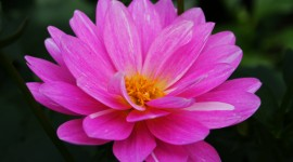 Pink Flower wallpaper download #398