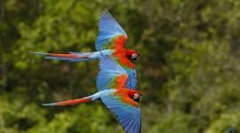 Birds hd photos #320