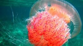 Jellyfish free #914