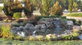 Pond iPhone 6 #216