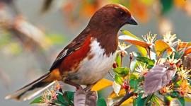 Birds For mobile #235