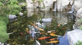 Pond HD #467