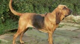 Bloodhound free download #608