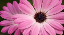 Pink Flower Photo #344