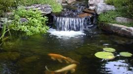 Pond High Quality #215