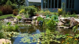 Pond Pic #565