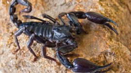 Scorpion Pics #215