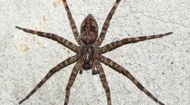 Spider Photo #835