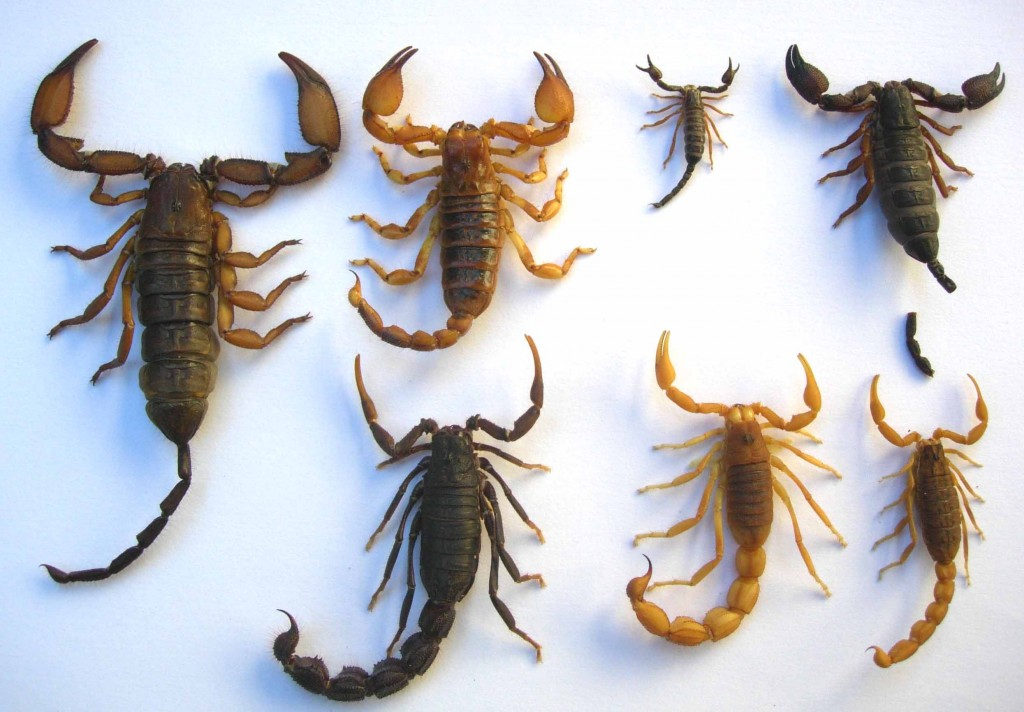 Scorpion wallpapers HD