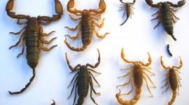 Scorpion Image #777
