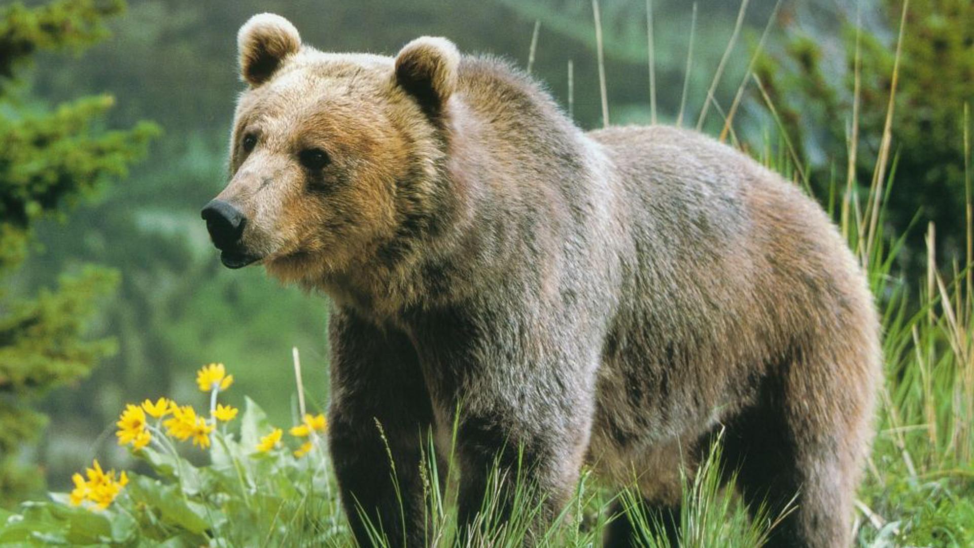 Картинки и карикатуры про медведей 82