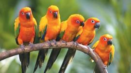 Birds free download #409
