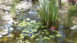 Pond wallpaper pack #976