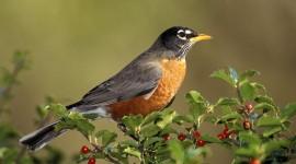 Birds for mac #587