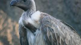 Vulture free #440