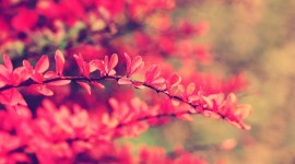 Pink Flower wallpaper pack #666