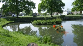Pond Images #951