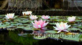 Pond Photos #165