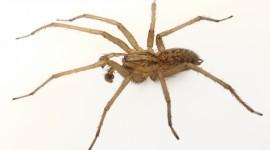 Spider Pics #479