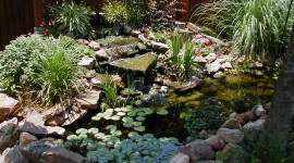 Pond for mac #974