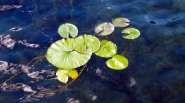 Pond Wallpaper #983