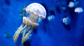 Jellyfish Photos #539